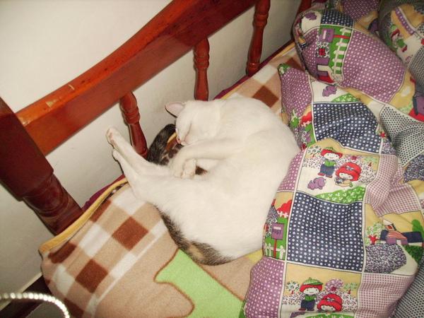 KIK貓愛睡覺