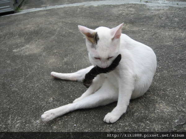 KIKI貓 062.jpg