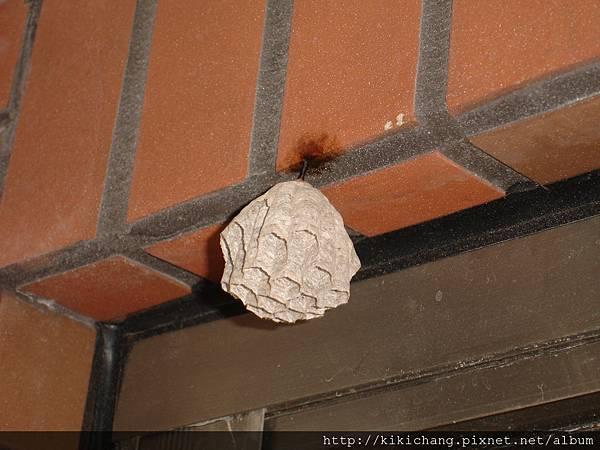 20110601後陽台蜂窩1.JPG