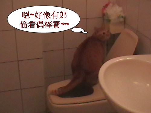 1 貓大便.jpg