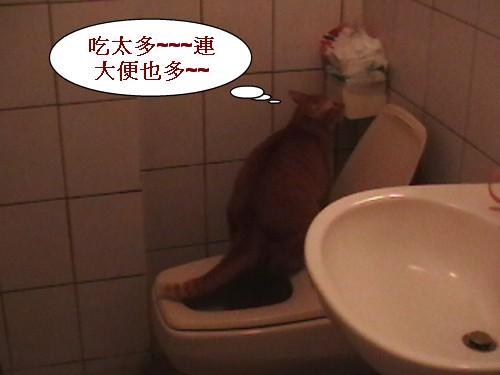 2 不用貓沙的貓.jpg