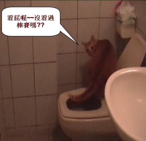 3 貓咪棒賽.jpg