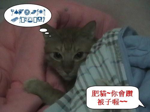 1肥貓鑽被子.jpg