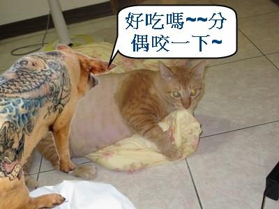 4  不太正常的貓.jpg