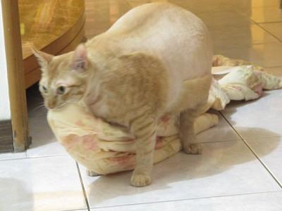 2  不太正常的貓.jpg