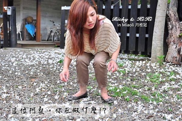 苗栗-月桂冠 (民宿)