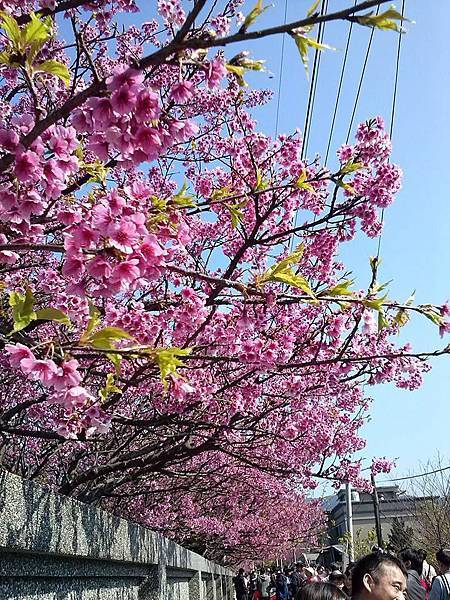 1545566_522585757860973_1663647927_n.jpg賞櫻與夢幻湖踏青!.jpg