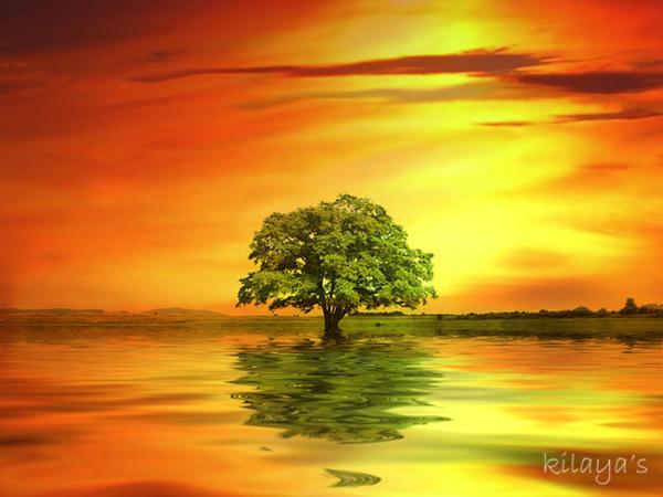 當世界只剩下一棵樹.jpg