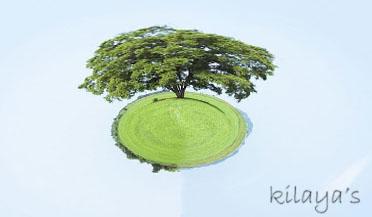 一顆樹的星球.jpg