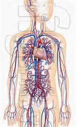 血管清道夫