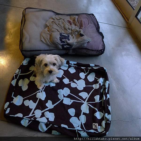 Molly Mutt狗床