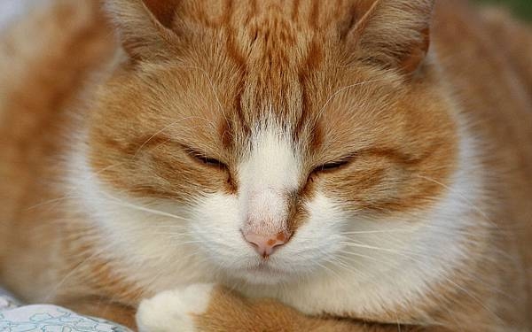 a-cute-little-sleeping-cat-pictures-widescreen-wallpapers