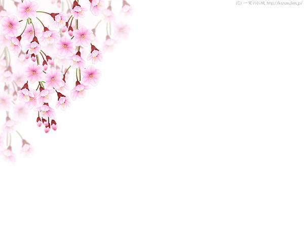 cherryblossom07.jpg