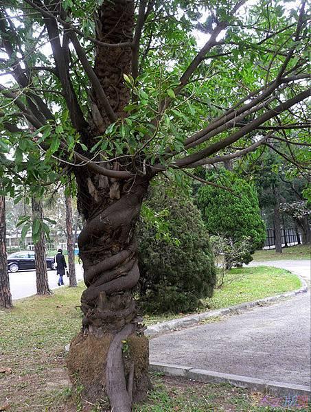樹的旅行004.jpg