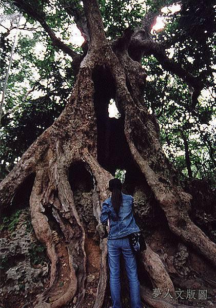 樹的旅行003.jpg