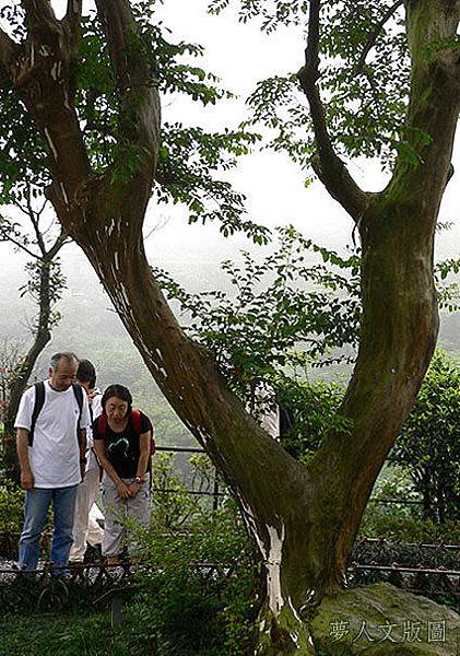 樹的旅行006.jpg