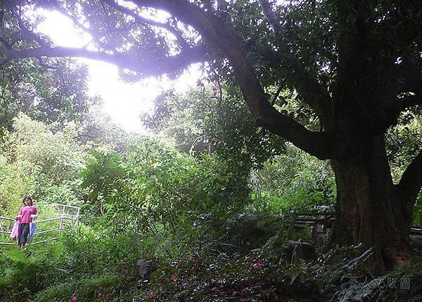樹的旅行005.jpg