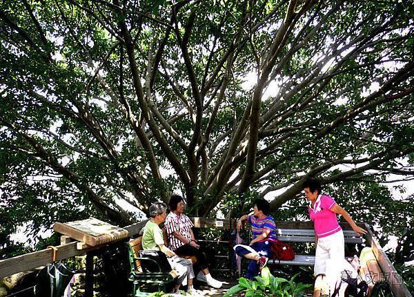 樹的旅行007.jpg
