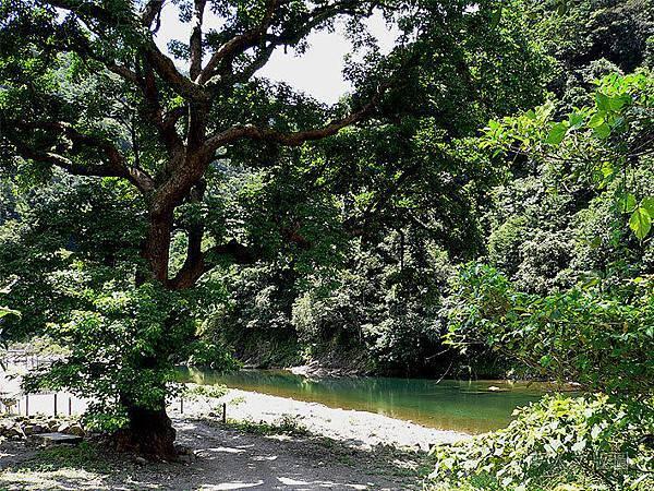 樹的旅行010.jpg
