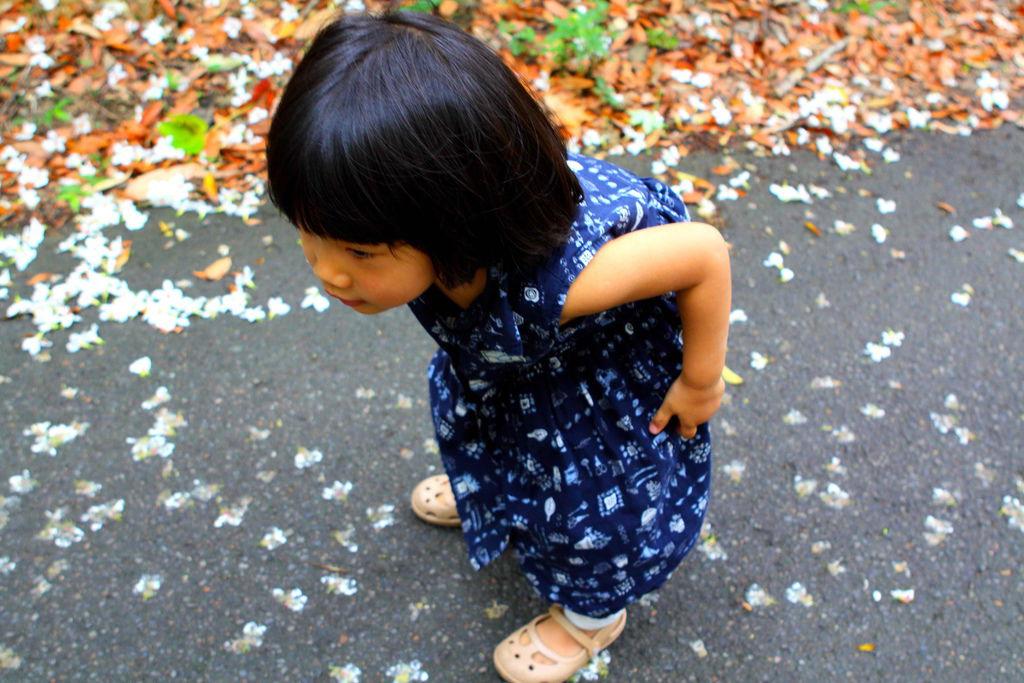 油桐花,在慈湖