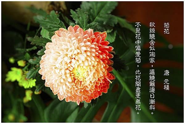 nEO_IMG_KIN_69051.jpg