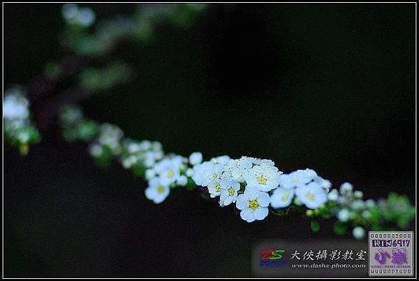 nEO_IMG_KIN_9596.jpg