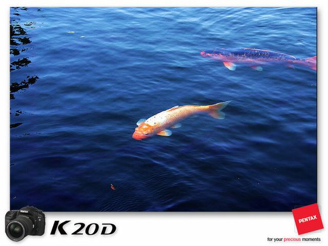 KIN_8520