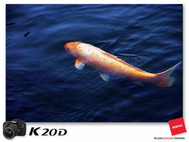 KIN_8521