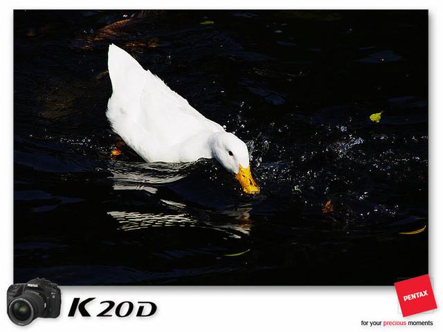 KIN_8570