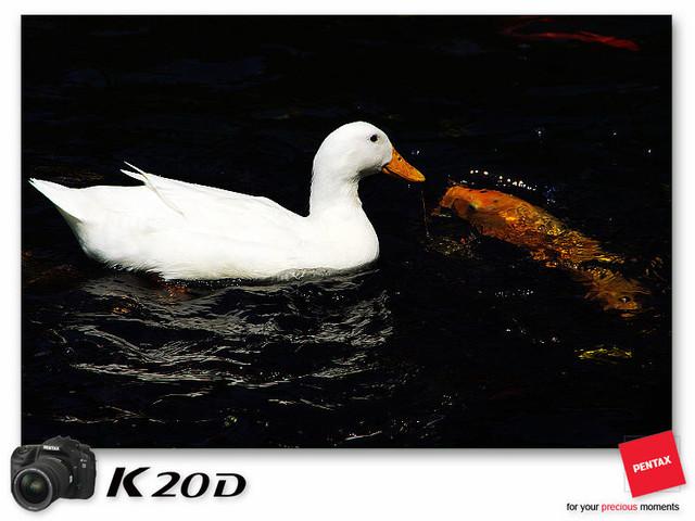KIN_8571