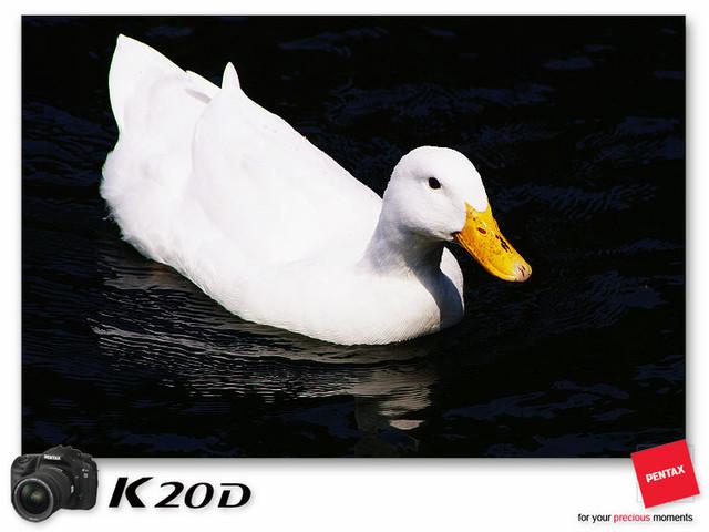 KIN_8576