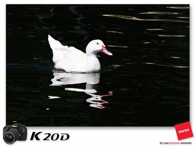 KIN_8583