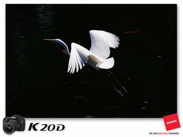 KIN_8637