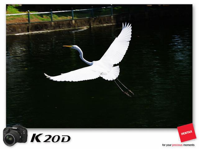 KIN_8638