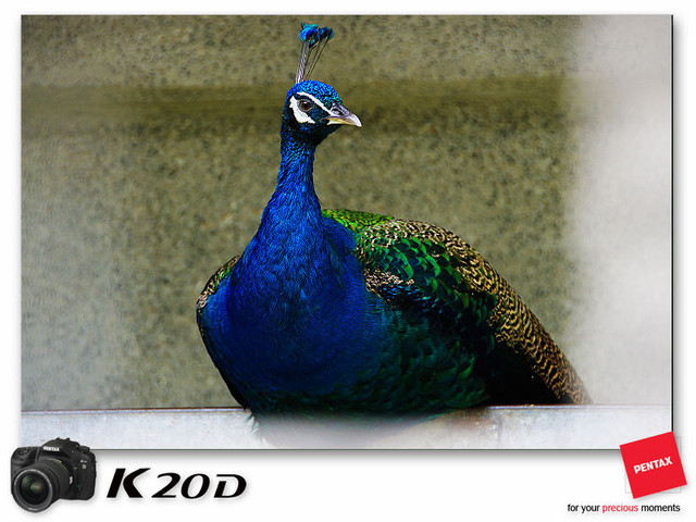 KIN_8744