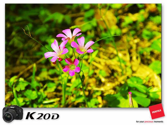 KIN_8761