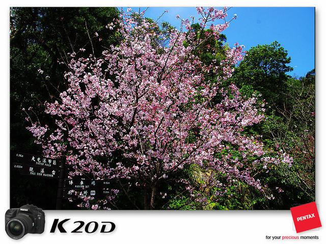 KIN_8806