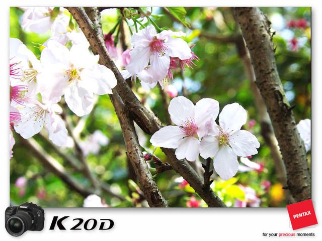 KIN_8836