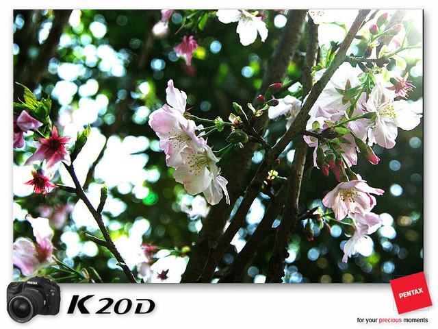 KIN_8840