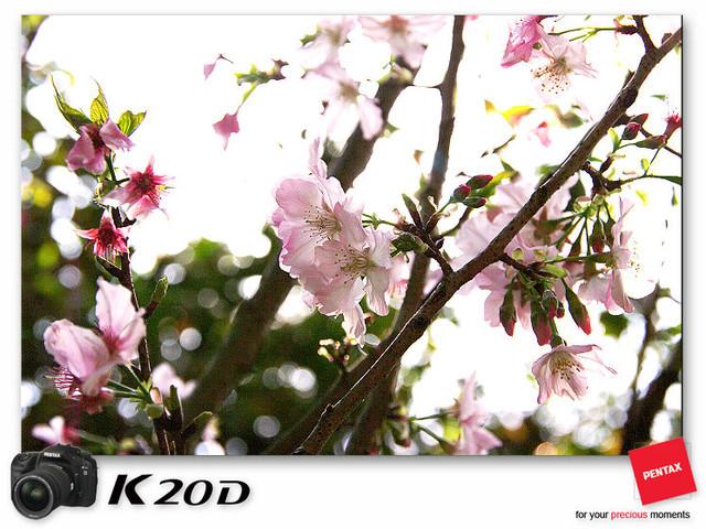 KIN_8853