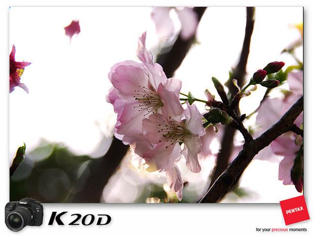 KIN_8857