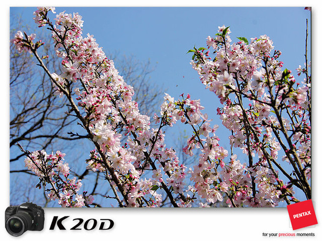 KIN_8872