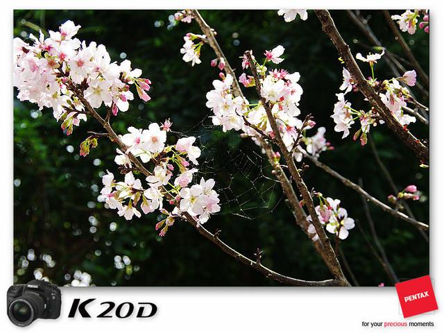 KIN_8877