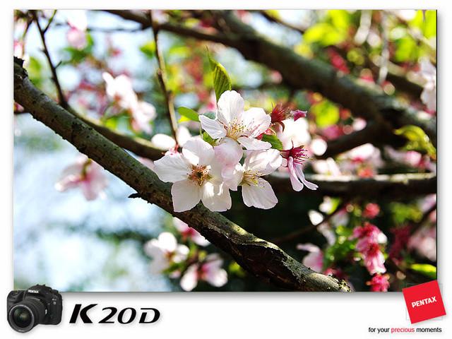 KIN_8878