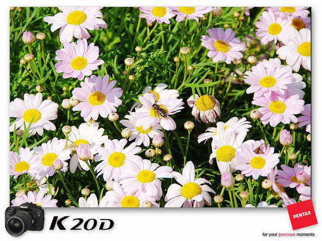 KIN_8899
