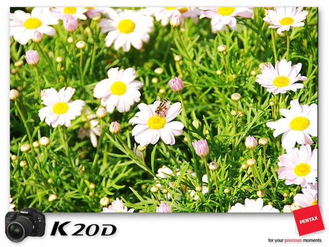 KIN_8904