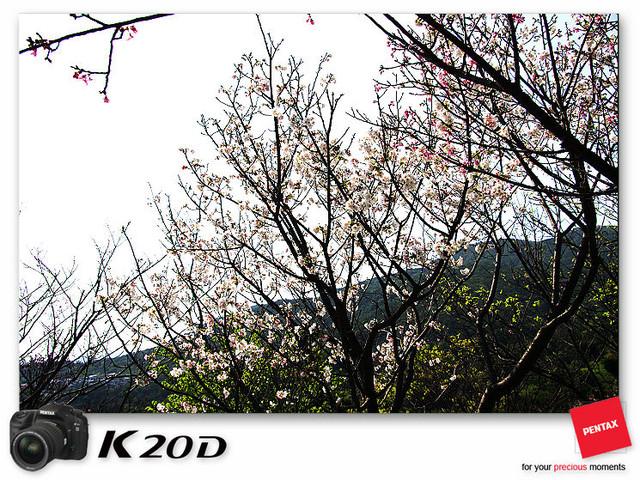 KIN_8918