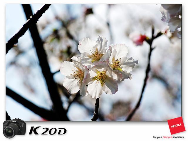 KIN_8928