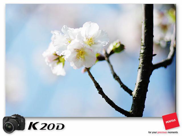 KIN_8930