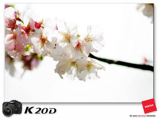 KIN_8932